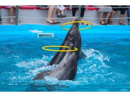 купить сертификат в дельфинарий